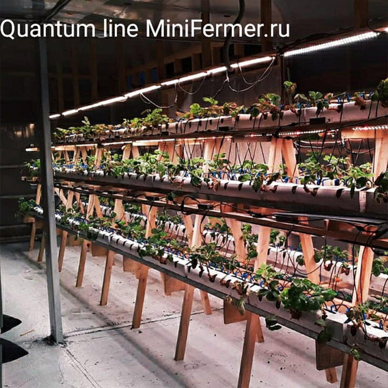 Двойной Quantum line ver.1 90 см 2шт в сборе 281b